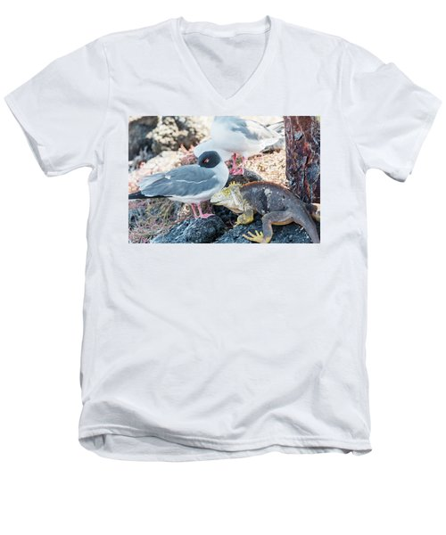 Swallow Tailed Gull And Iguana On  Galapagos Islands Men's V-Neck T-Shirt
