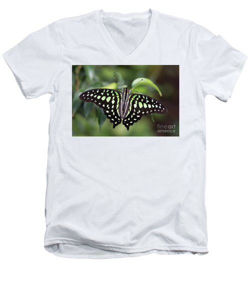 Tailed Jay Men's V-Neck T-Shirt