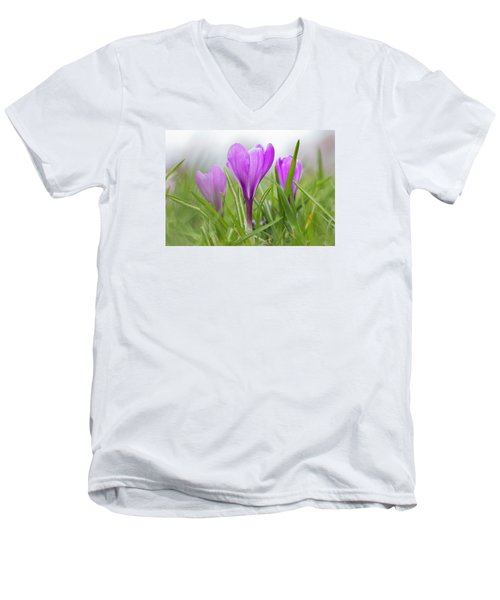 Three Glorious Spring Crocuses Men's V-Neck T-Shirt