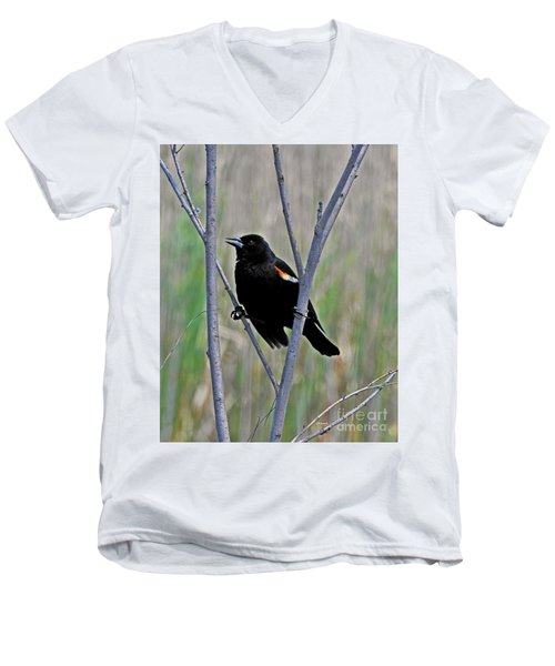 Tricolored Blackbird Men's V-Neck T-Shirt