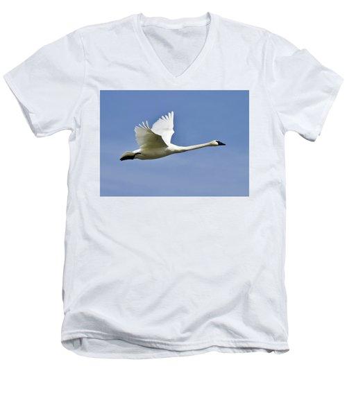 Trumpeter Swan In Flight Men's V-Neck T-Shirt