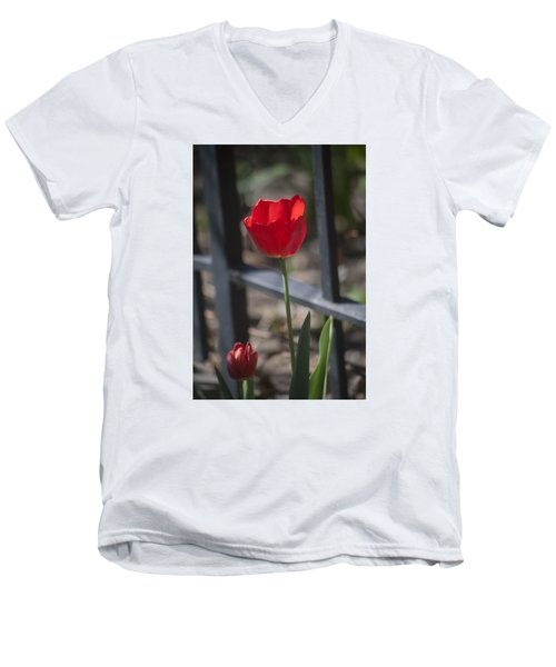 Tulip And Garden Fence Men's V-Neck T-Shirt by Morris  McClung