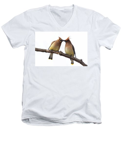 Waxwings In Love Men's V-Neck T-Shirt