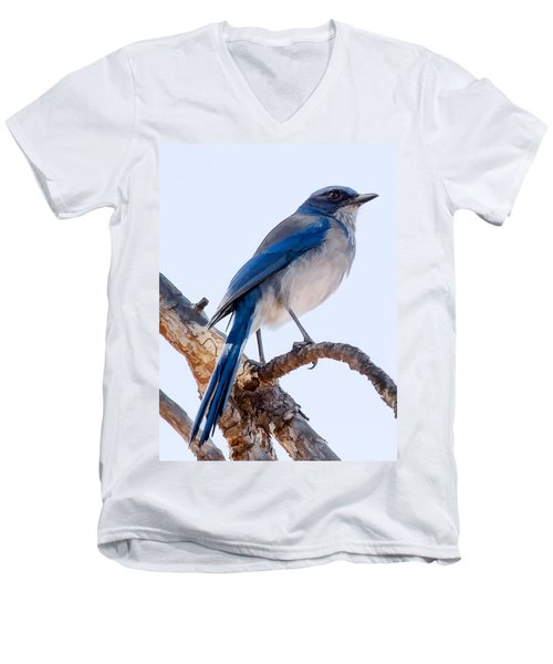 Western Scrub-jay Men's V-Neck T-Shirt