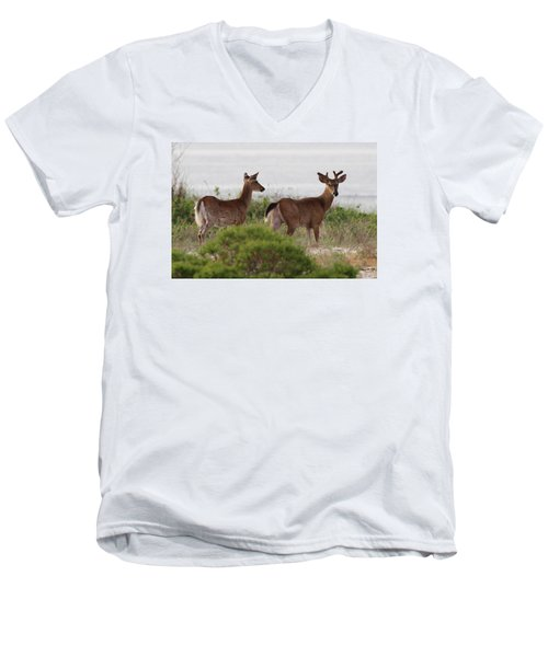 White Tail Deer Port Jefferson New York Men's V-Neck T-Shirt