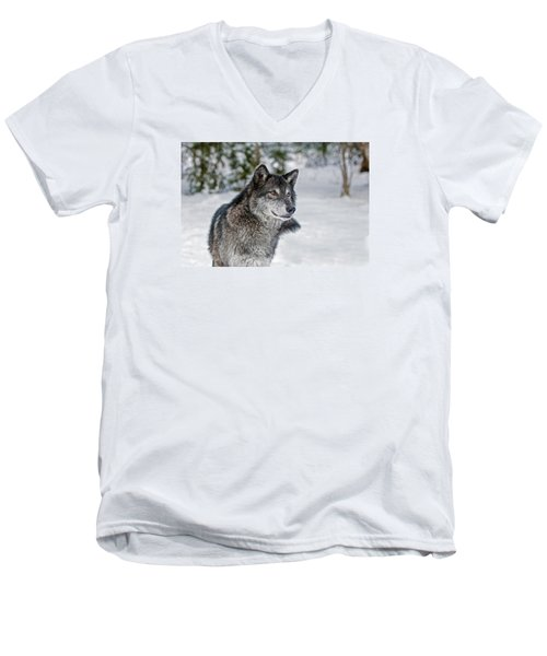 Wolf Portrait Men's V-Neck T-Shirt