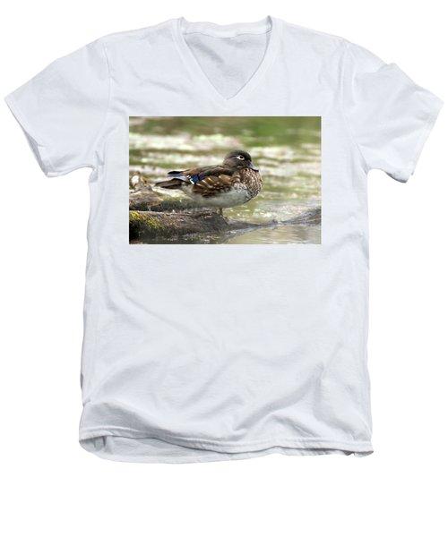 Wood Duck Hen Men's V-Neck T-Shirt