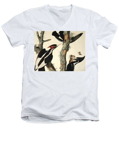 Woodpecker Men's V-Neck T-Shirt by John James Audubon