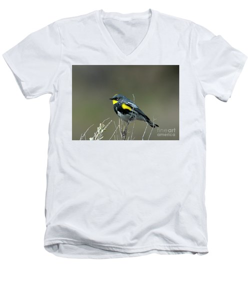 Yellow-rumped Warbler Men's V-Neck T-Shirt by Mike Dawson