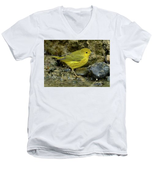 Men's V-Neck T-Shirt featuring the photograph Yellow Warbler by Doug Herr