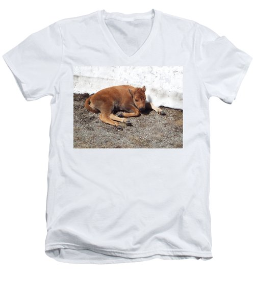 Yellowstone Bison Calf  Men's V-Neck T-Shirt