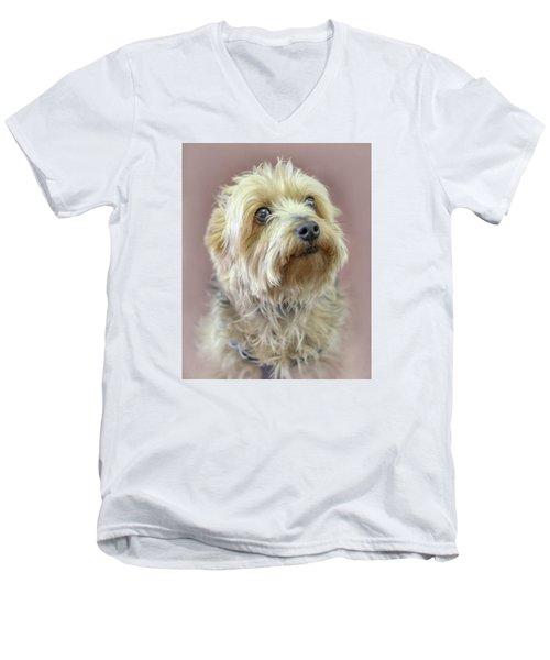 Yorkshire Terrier Men's V-Neck T-Shirt by Marion Johnson