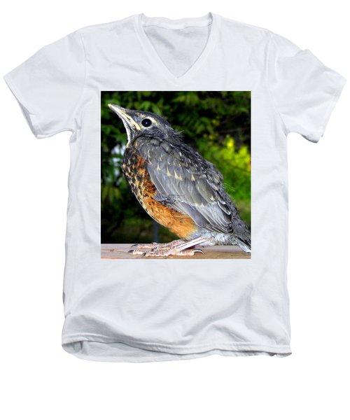 Young American Robin Men's V-Neck T-Shirt