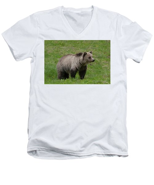Young Grizzly Men's V-Neck T-Shirt