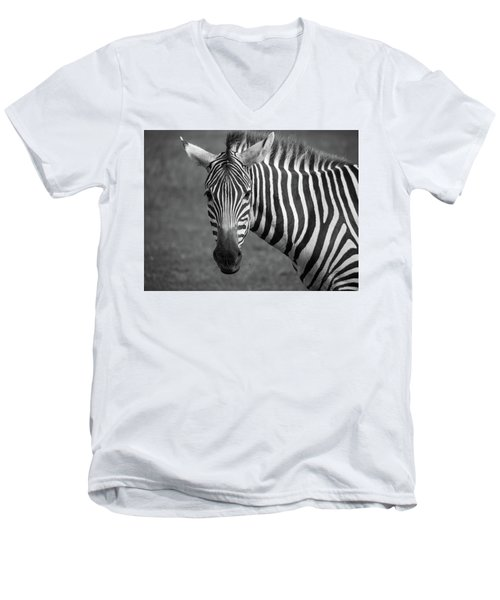 Men's V-Neck T-Shirt featuring the photograph Zebra by Trace Kittrell