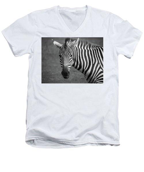 Zebra Men's V-Neck T-Shirt by Trace Kittrell