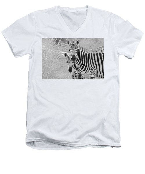 Zebras Men's V-Neck T-Shirt by Patrick Kain