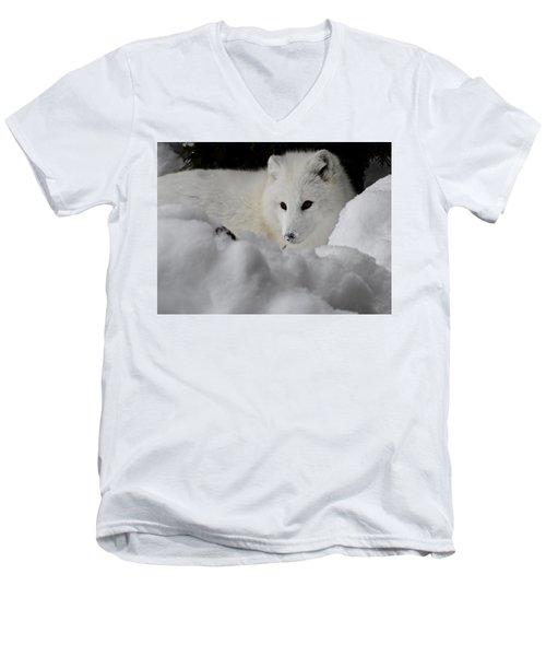 Artic Fox Men's V-Neck T-Shirt