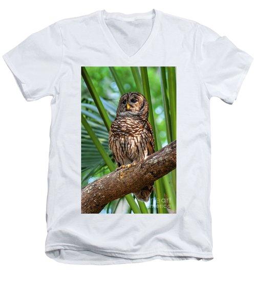 Barred Owl On Perch Men's V-Neck T-Shirt