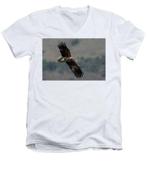 Egyptian Vulture, Sub-adult Men's V-Neck T-Shirt