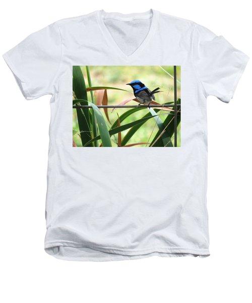 Fairy-wren 1 Men's V-Neck T-Shirt
