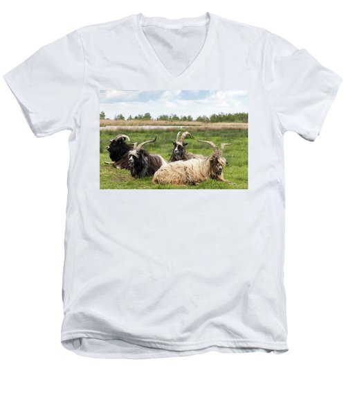 Men's V-Neck T-Shirt featuring the photograph Goats  by Anjo Ten Kate