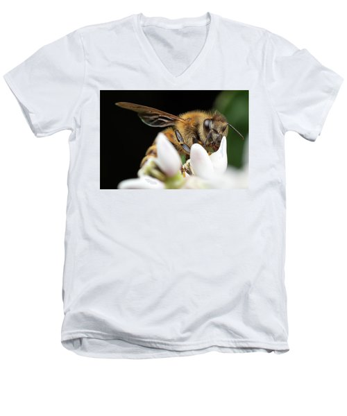 Honeybee Peeking Men's V-Neck T-Shirt