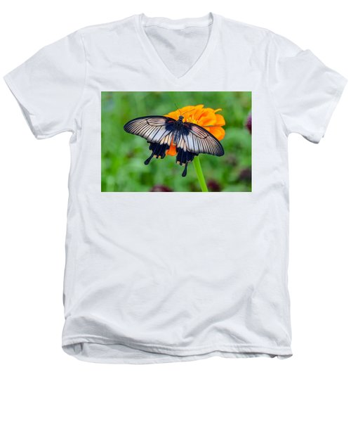 Kite Swallowtail  Men's V-Neck T-Shirt