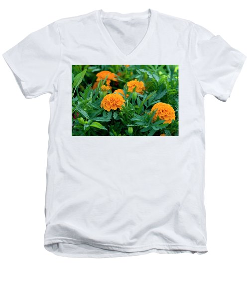 Marigolds Men's V-Neck T-Shirt
