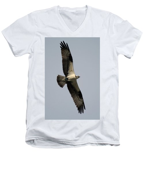 Osprey With Fish Men's V-Neck T-Shirt