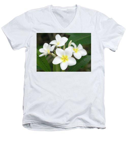 Pleasing Plumeria Men's V-Neck T-Shirt