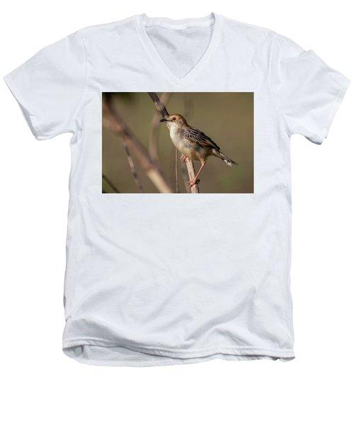 Rattling Cisticola Men's V-Neck T-Shirt
