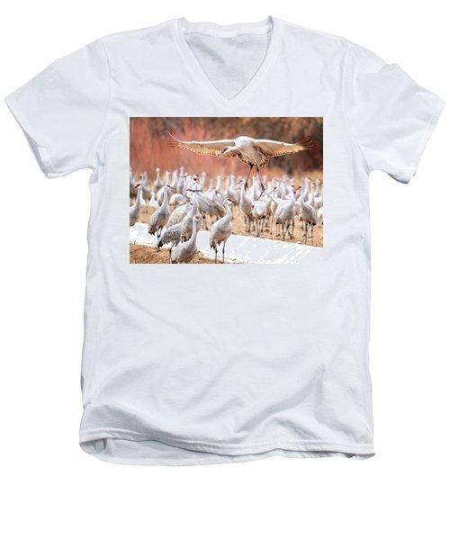 Ready Or Not, Here I Come -- Sandhill Cranes Men's V-Neck T-Shirt