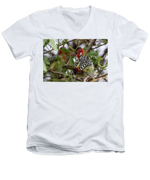 Red-and-yellow Barbet Men's V-Neck T-Shirt