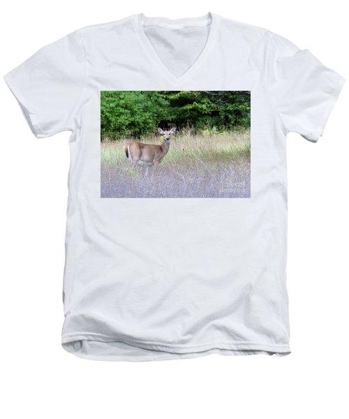 White Tale Deer Men's V-Neck T-Shirt