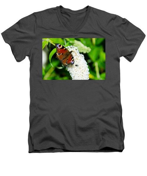 Peacock Butterfly Men's V-Neck T-Shirt by Martina Fagan