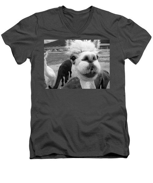 Alpaca Face Men's V-Neck T-Shirt