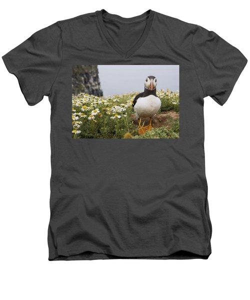 Atlantic Puffin In Breeding Plumage Men's V-Neck T-Shirt by Sebastian Kennerknecht