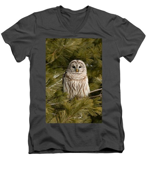 Barred Owl In A Pine Tree. Men's V-Neck T-Shirt
