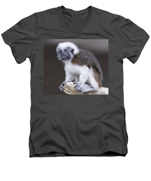 Men's V-Neck T-Shirt featuring the photograph Cotton Top Tamarin by Shoal Hollingsworth