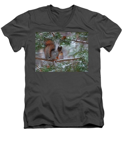 Eurasian Red Squirrel Men's V-Neck T-Shirt