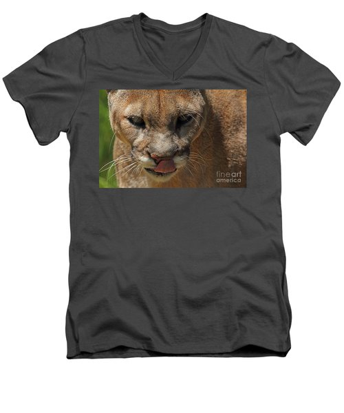 Men's V-Neck T-Shirt featuring the photograph Florida Panther by Meg Rousher