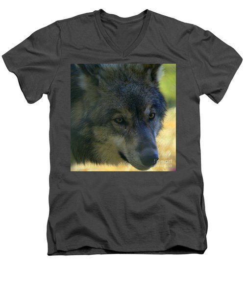 Gray Wolf Men's V-Neck T-Shirt