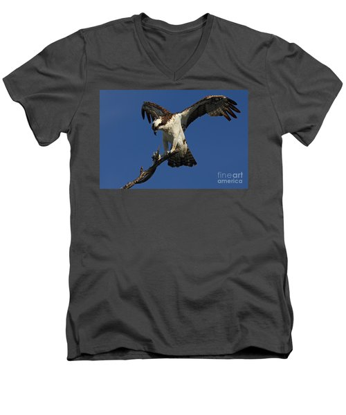 Osprey With A Fish Photo Men's V-Neck T-Shirt