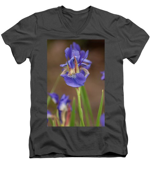 Purple Bearded Iris Men's V-Neck T-Shirt