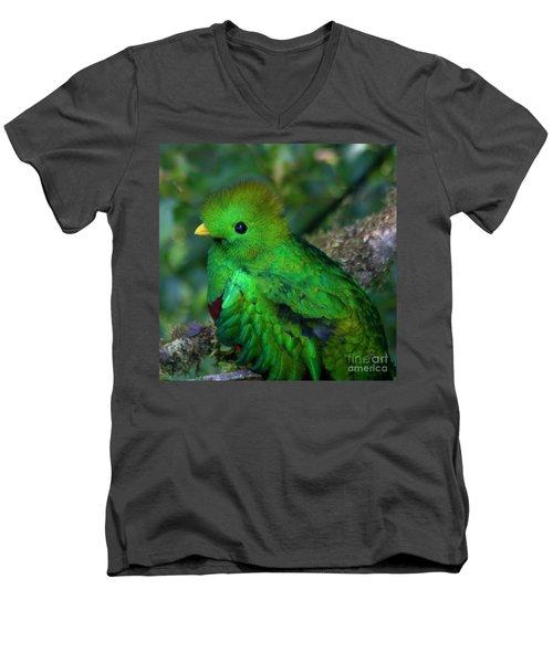 Quetzal Men's V-Neck T-Shirt