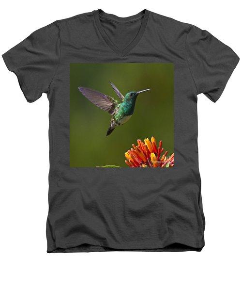 Snowy-bellied Hummingbird Men's V-Neck T-Shirt by Heiko Koehrer-Wagner