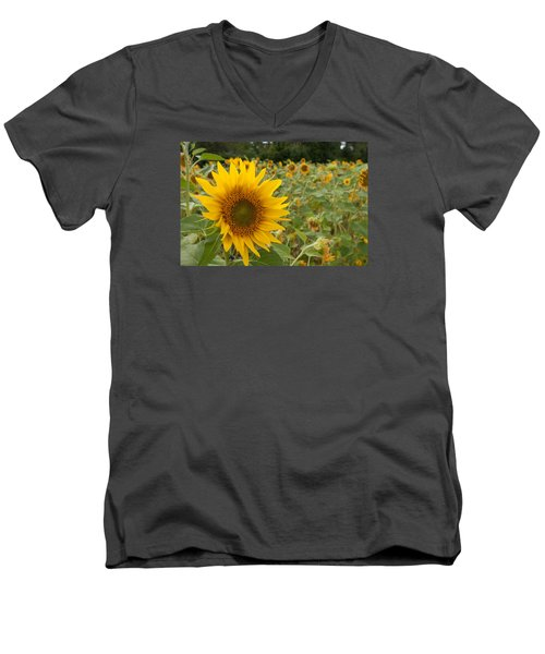 Sun Flower Fields Men's V-Neck T-Shirt by Miguel Winterpacht