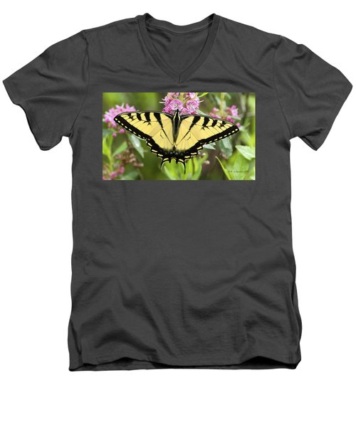 Tiger Swallowtail Butterfly On Milkweed Flowers Men's V-Neck T-Shirt