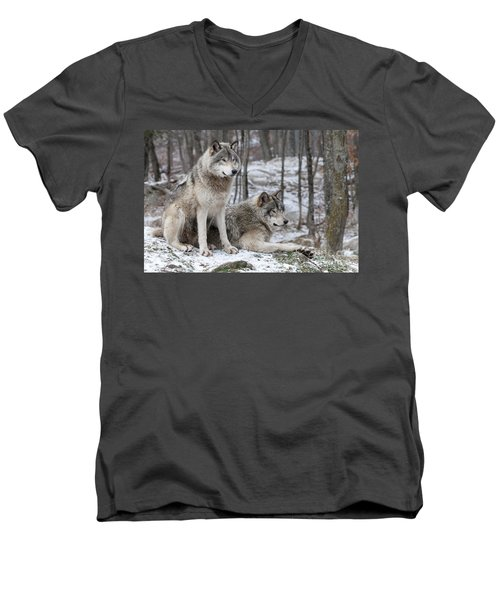 Timber Wolf Pair In Forest Men's V-Neck T-Shirt